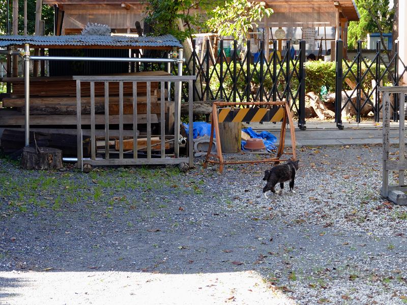 砂利駐車場から歩き去る猫2