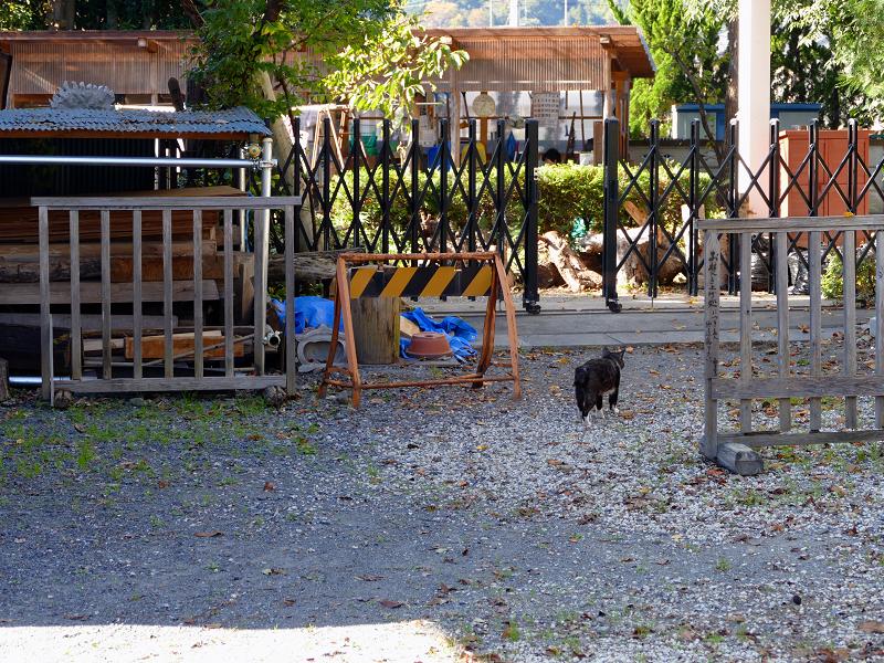 砂利駐車場から歩き去る猫3