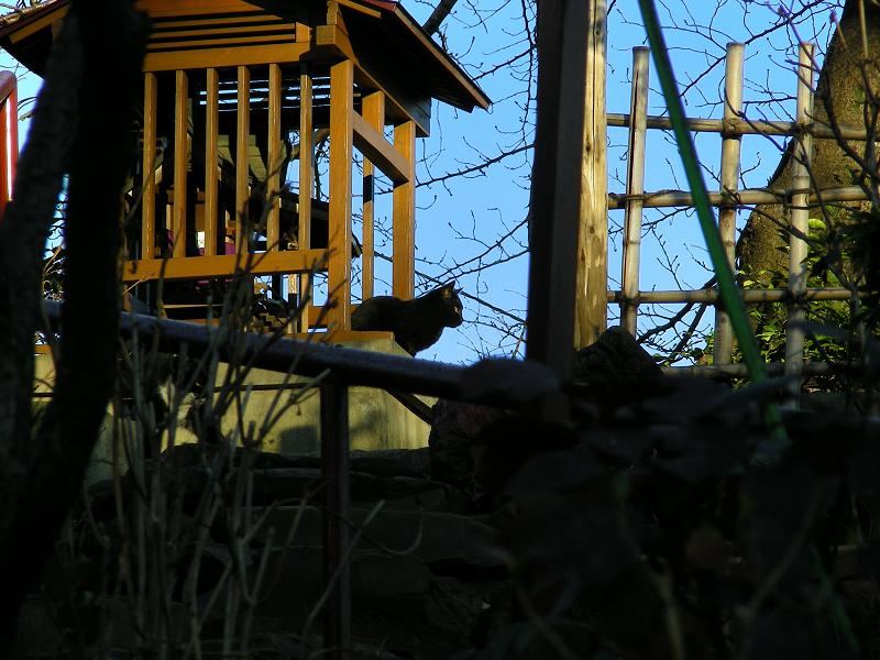 丘の祠と黒猫1