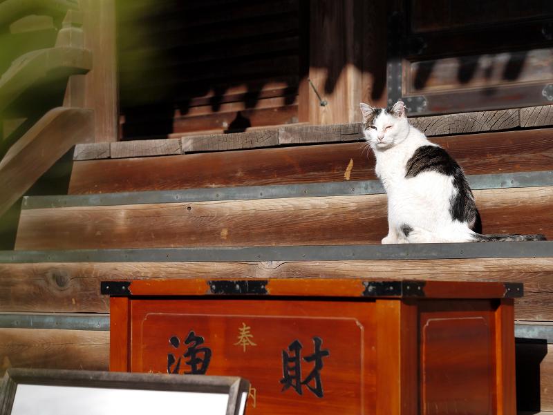 古堂の階段にいた白キジ猫2