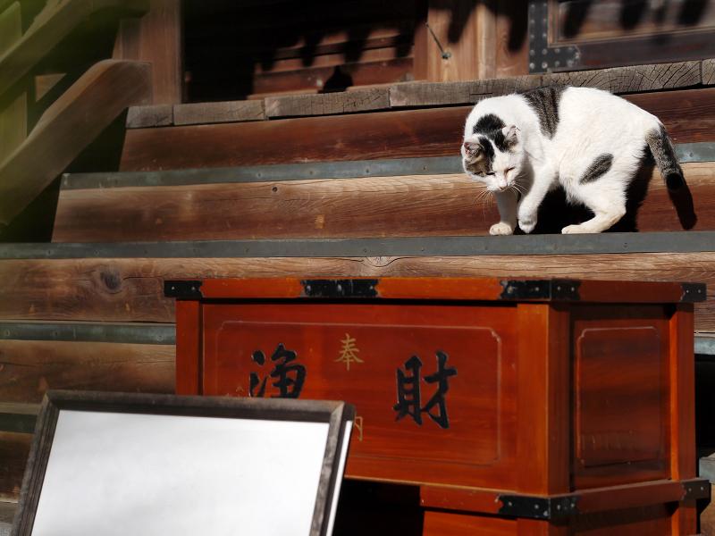 古堂の階段にいた白キジ猫3