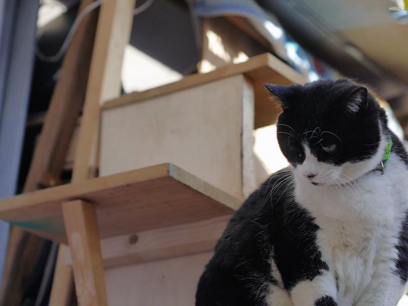 ハウス前の黒白猫2