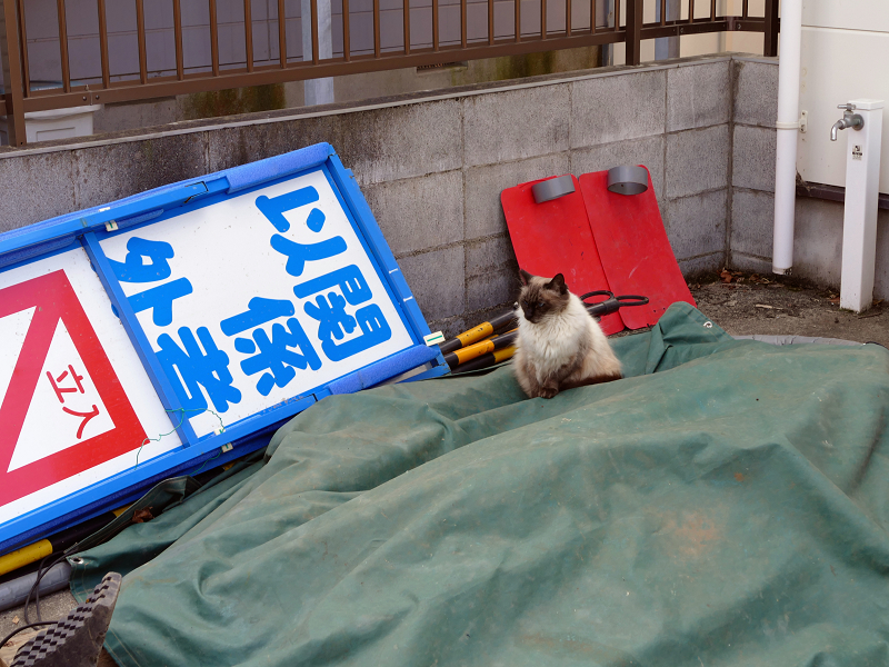 資材置き場と洋風猫1