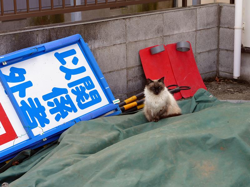 資材置き場と洋風猫2