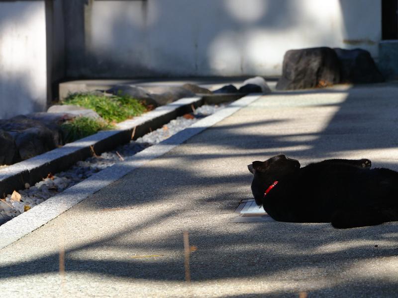 犬走りで転がってる黒猫2
