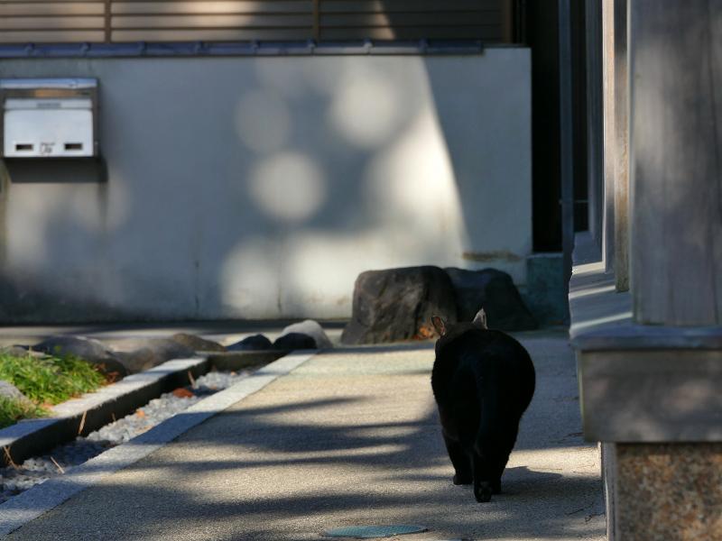 犬走りで転がってる黒猫3