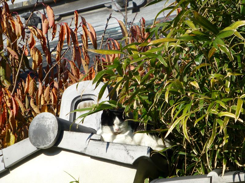 総門と黒白猫2