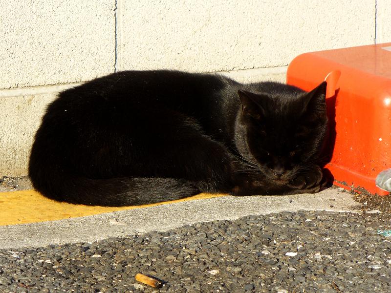 駐車場の黒猫たち1