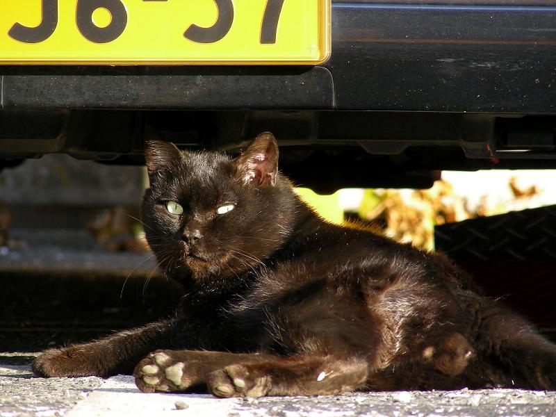 駐車場の黒猫たち3