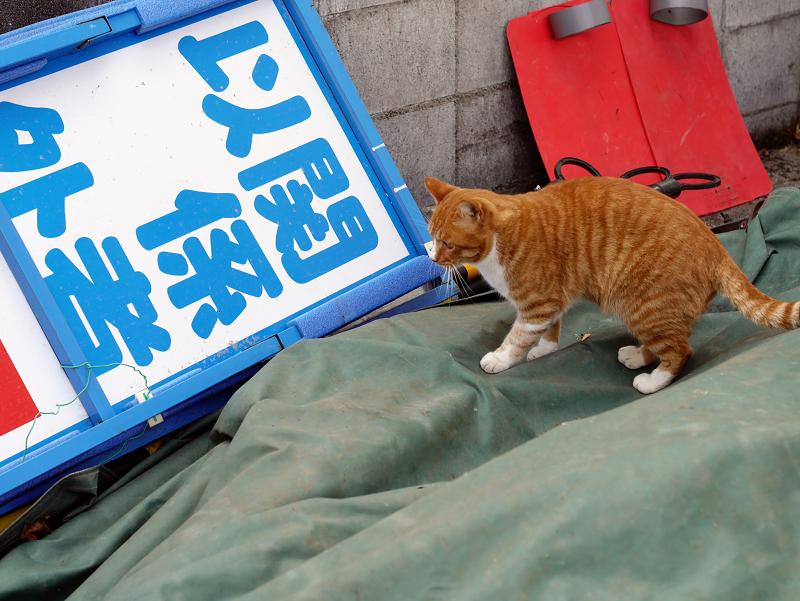 資材置き場の茶白猫1