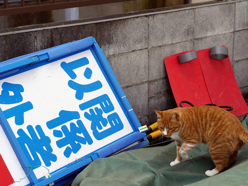 資材置き場の茶白猫2