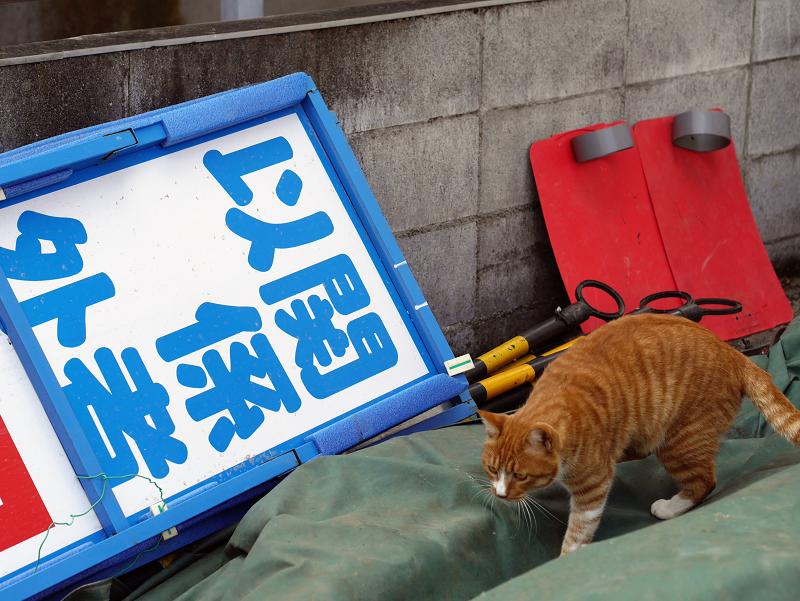 資材置き場の茶白猫3