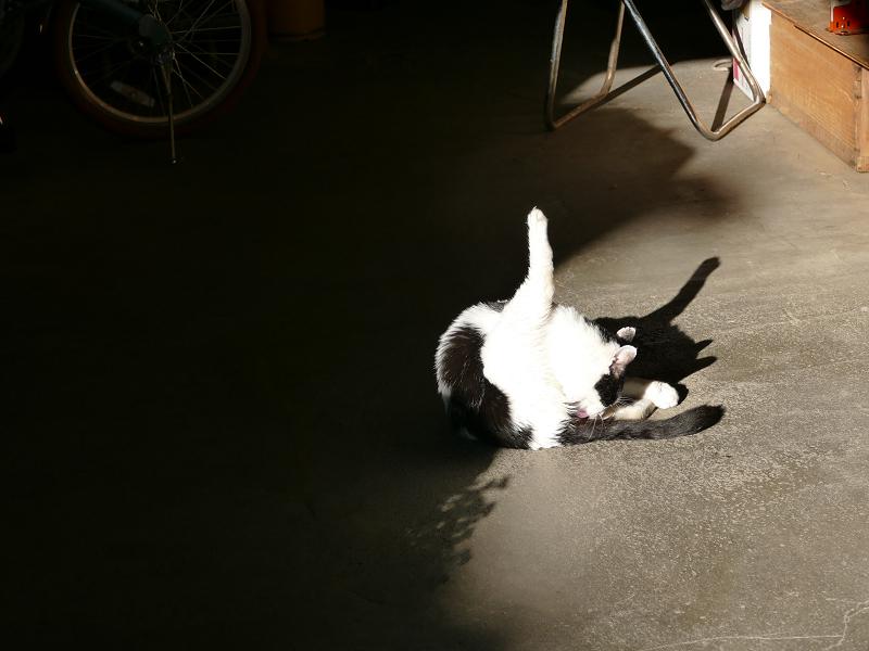 日溜まりで毛づくろいする白黒猫1