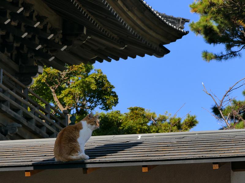 総門と屋根の上の茶白猫1