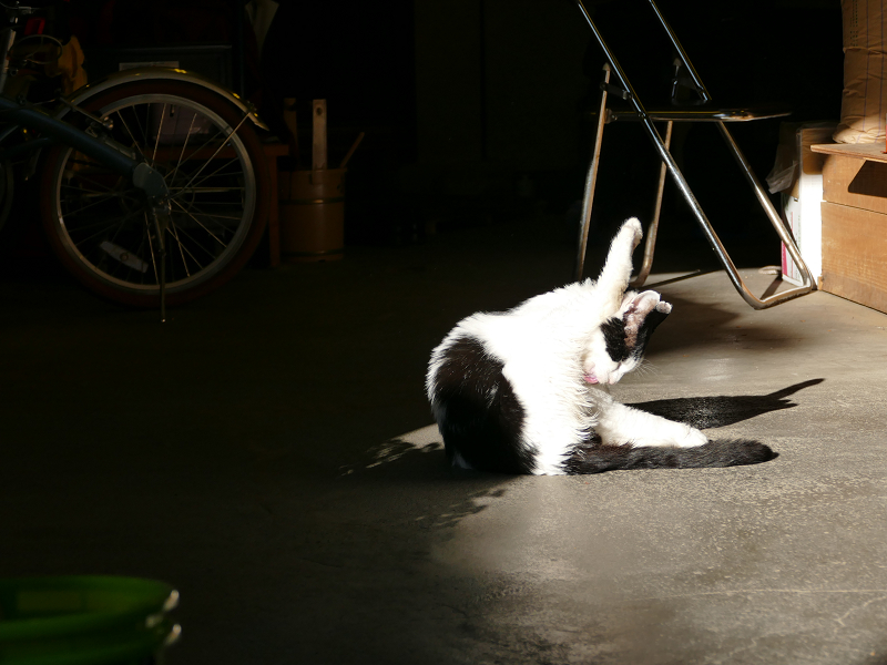 日溜まりで毛づくろいする白黒猫2