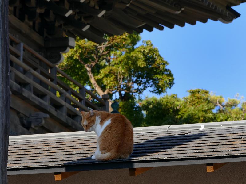 総門と屋根の上の茶白猫2