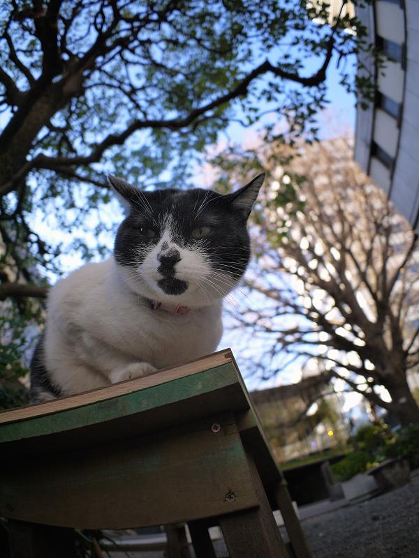 クスノキの下の白黒猫1
