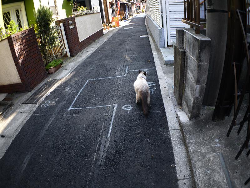 路地と洋風猫