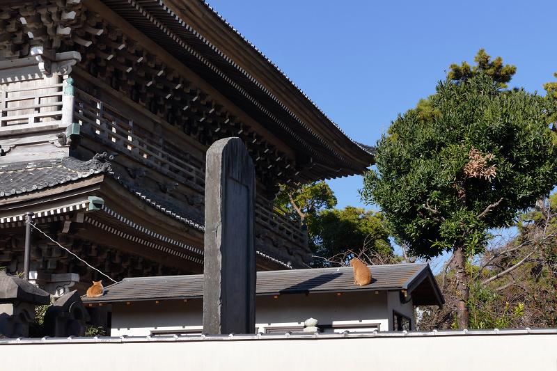 総門と石碑と屋根の上の猫たち1