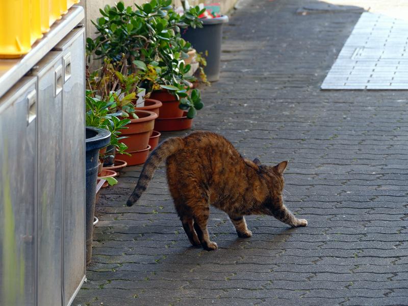 向こう向きで伸びをするサビ柄猫2