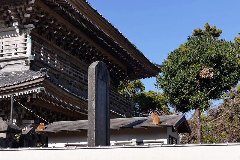 総門と石碑と屋根の上の猫たち2