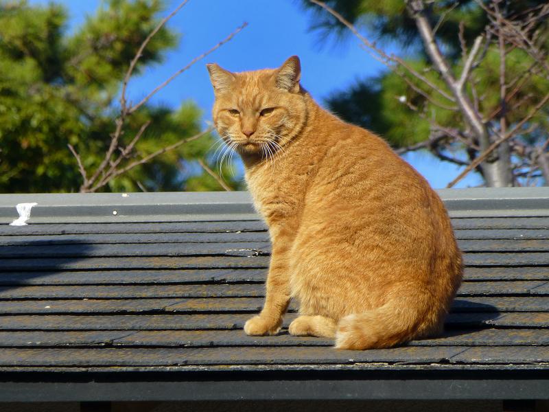 総門と石碑と屋根の上の猫たち3