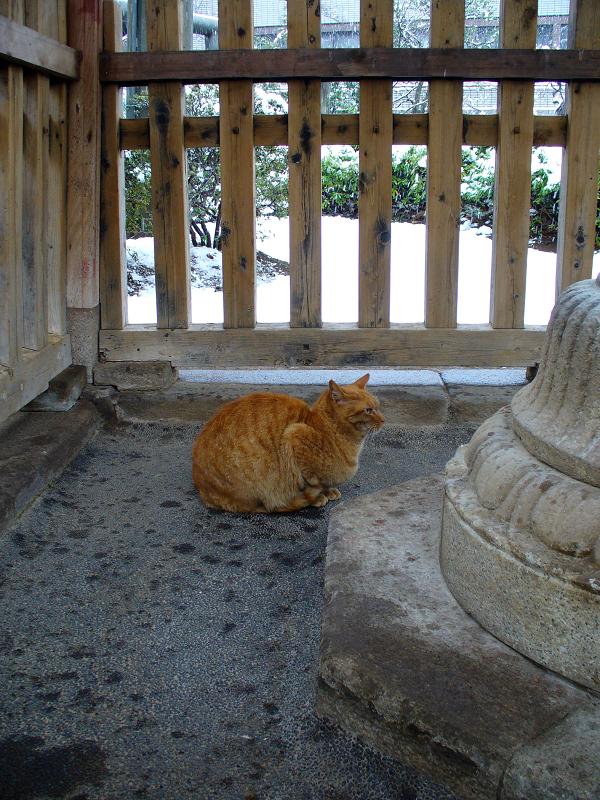 柵の中の茶トラ猫1