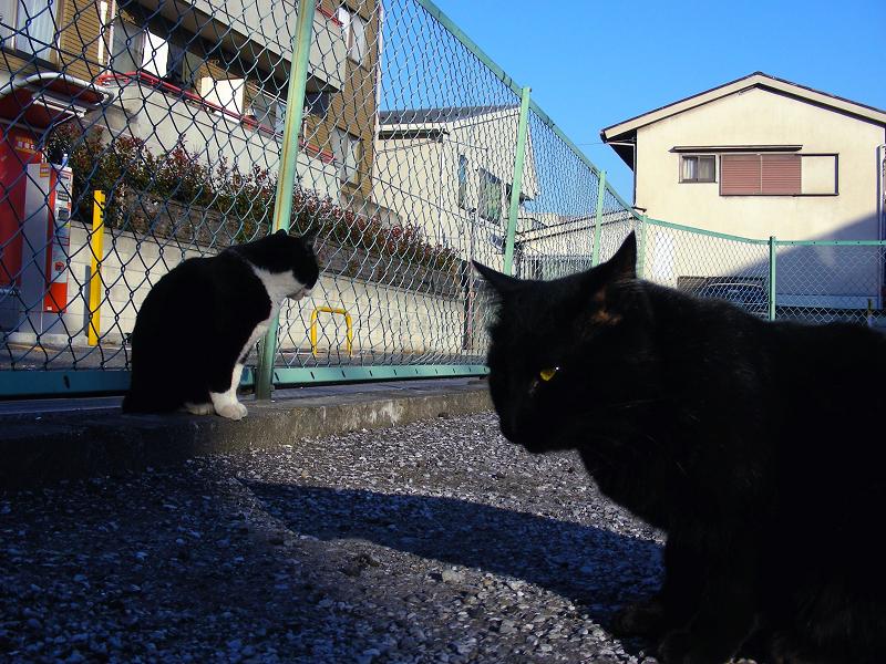 駐車場金網フェンスと猫たち2