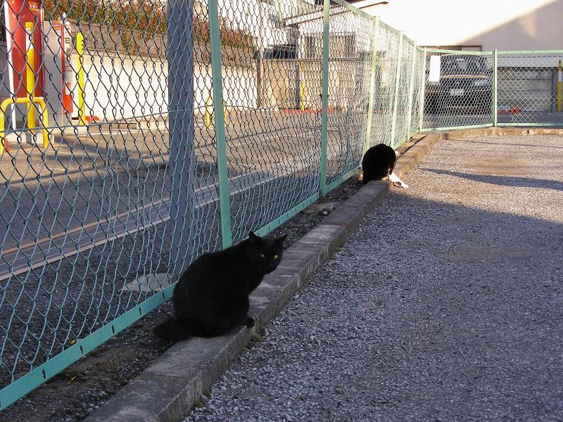 駐車場金網フェンスと猫たち1