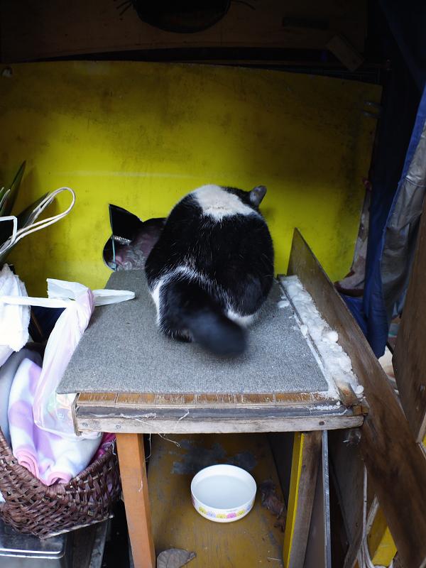 ハウス前の白黒猫1
