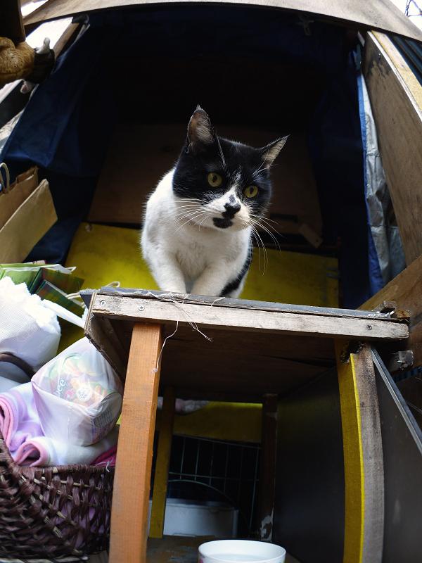 ハウス前の白黒猫2