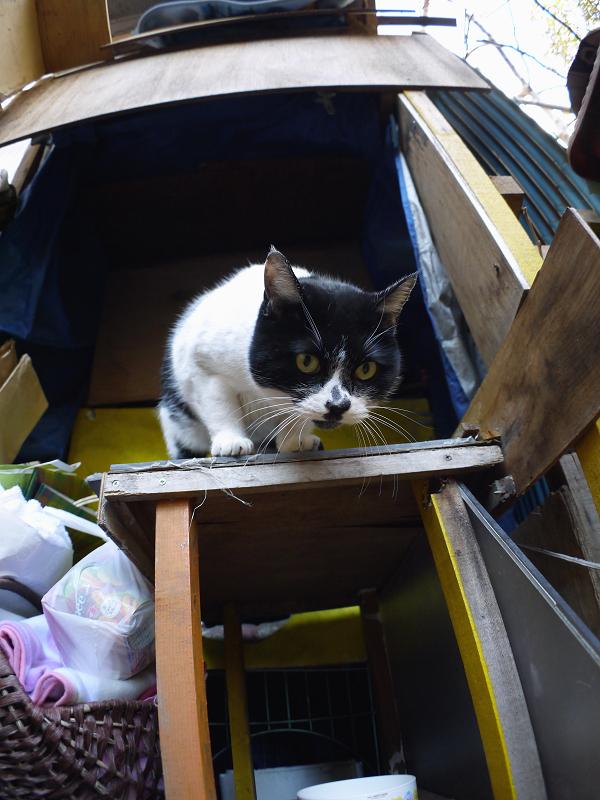 ハウス前の白黒猫3