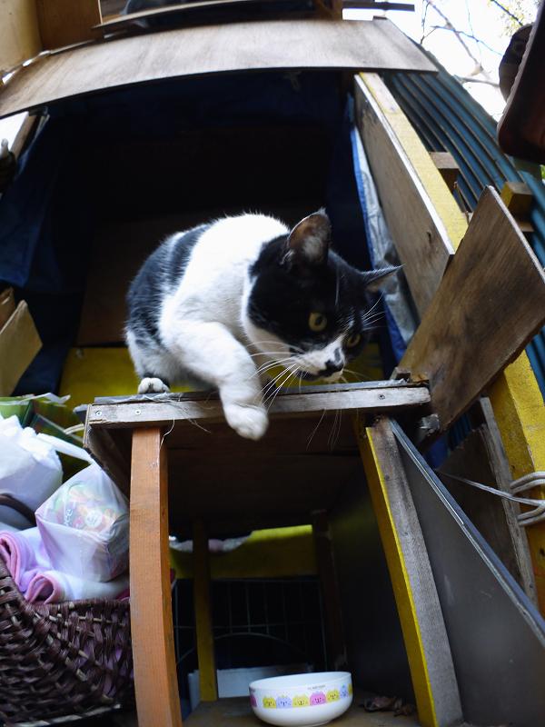 ハウス前の白黒猫4