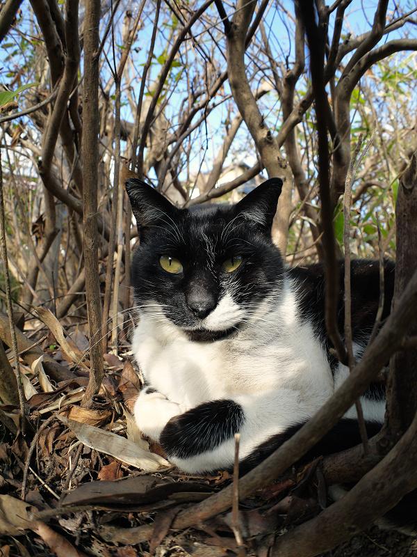 茂みの中の猫たち1