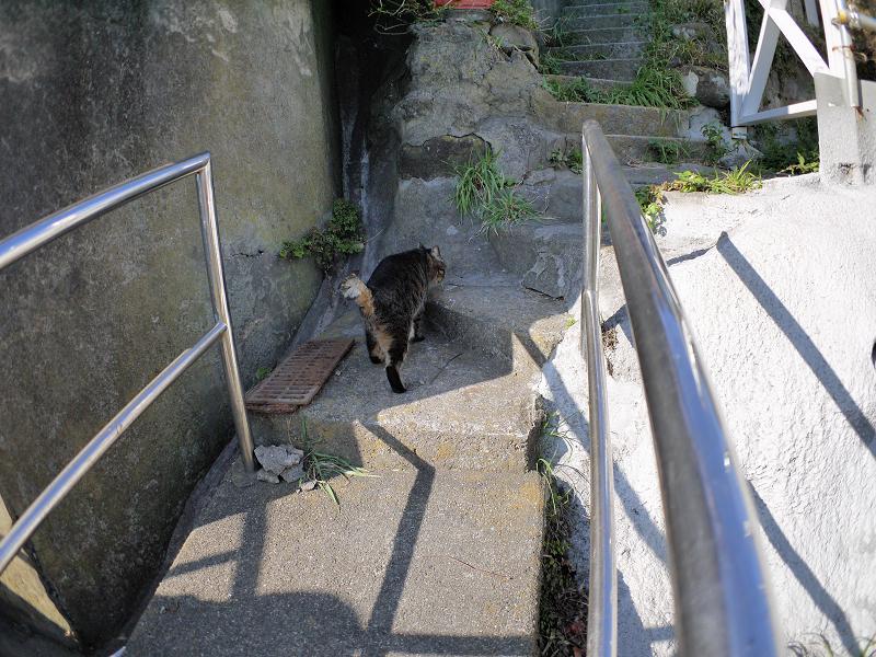 階段手すりとキジトラ猫1