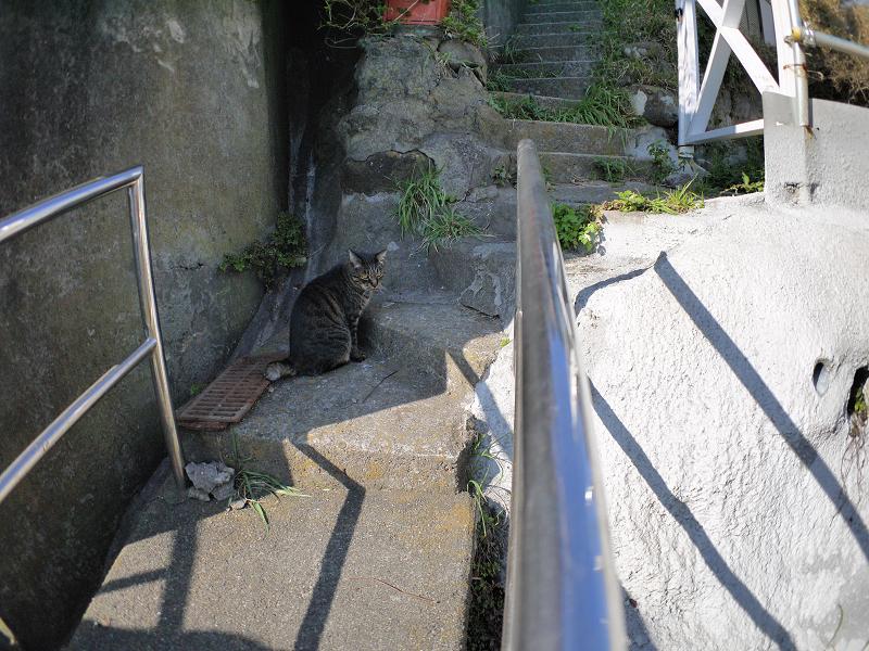 階段手すりとキジトラ猫2