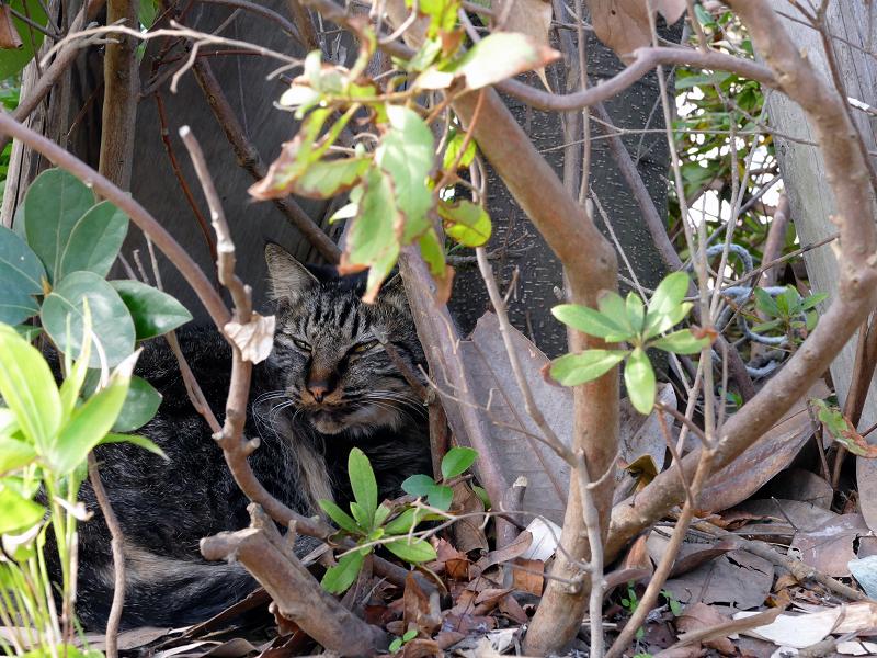茂みの中の猫たち2