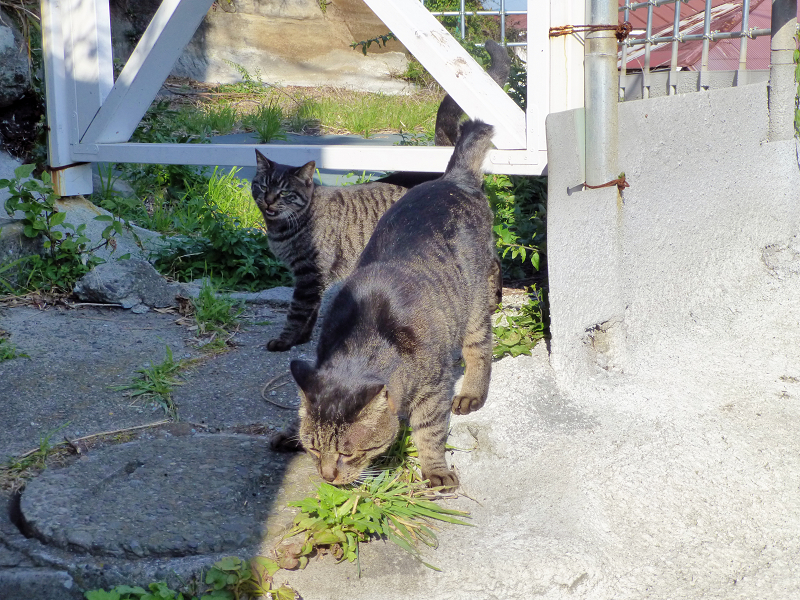 階段手すりとキジトラ猫3
