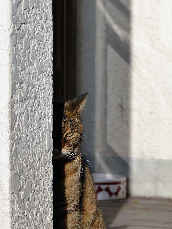 支柱とサビ柄猫
