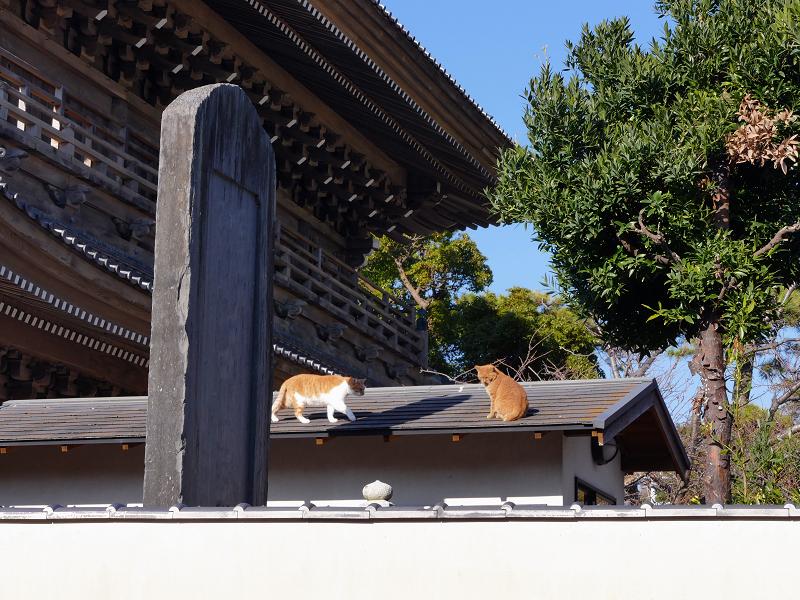 総門石碑屋根の上の茶白猫1