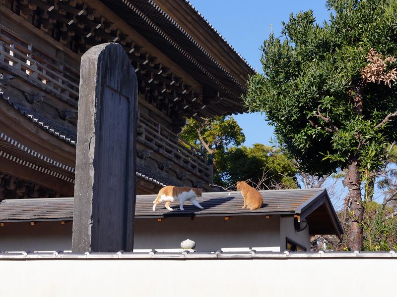 総門石碑屋根の上の茶白猫2