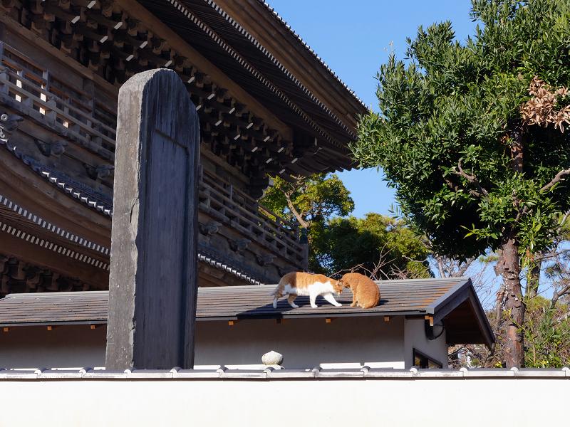 総門石碑屋根の上の茶白猫3
