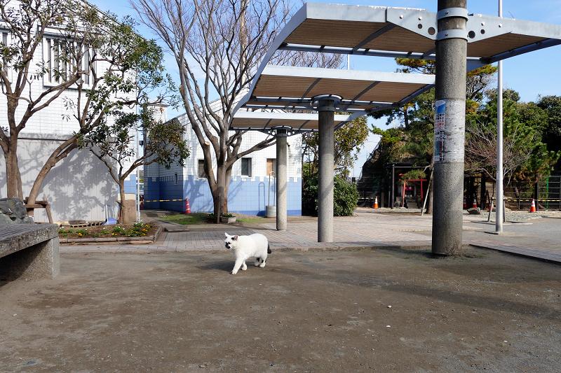 公園の白黒猫1