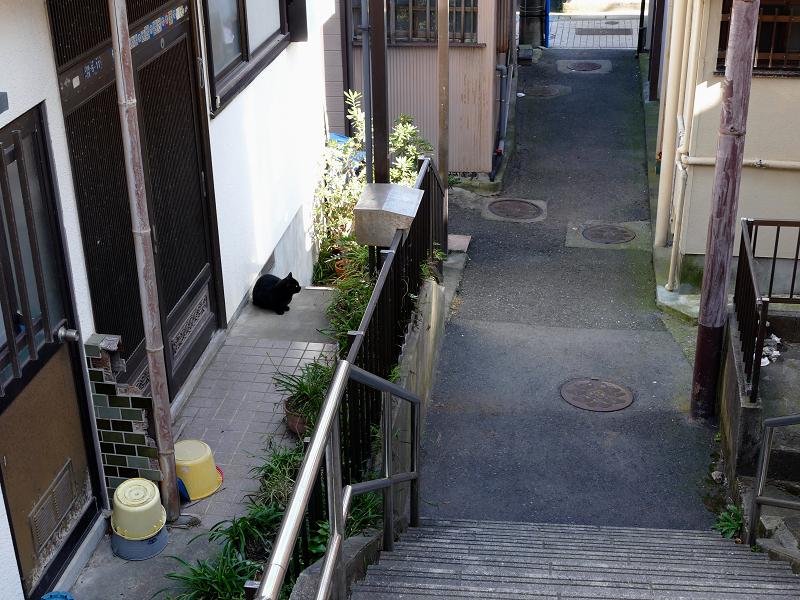民家玄関の黒猫1