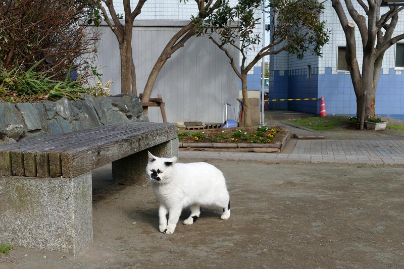 公園の白黒猫2