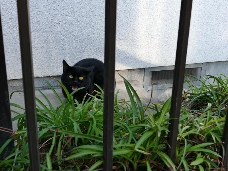 民家玄関の黒猫3