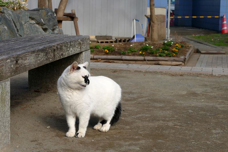 公園の白黒猫3
