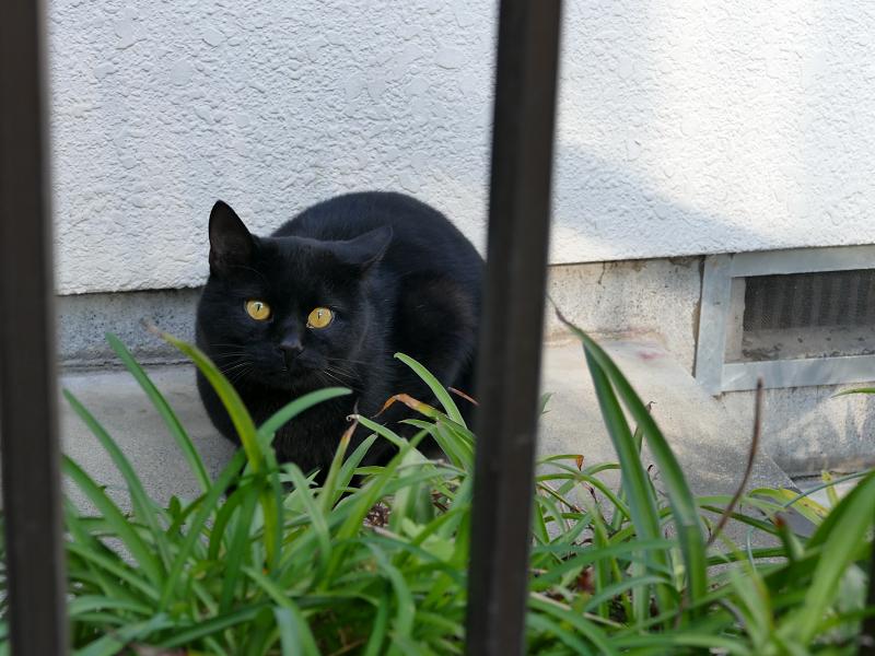 民家玄関の黒猫4
