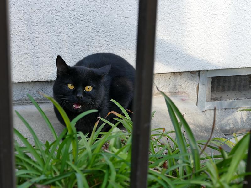 民家玄関の黒猫5