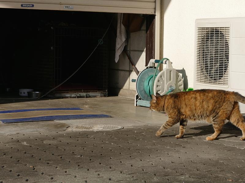 犬とサビ柄猫1